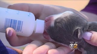 Riverside County Rescue Group Takes In Litter Of Abandoned Newborn Puppies