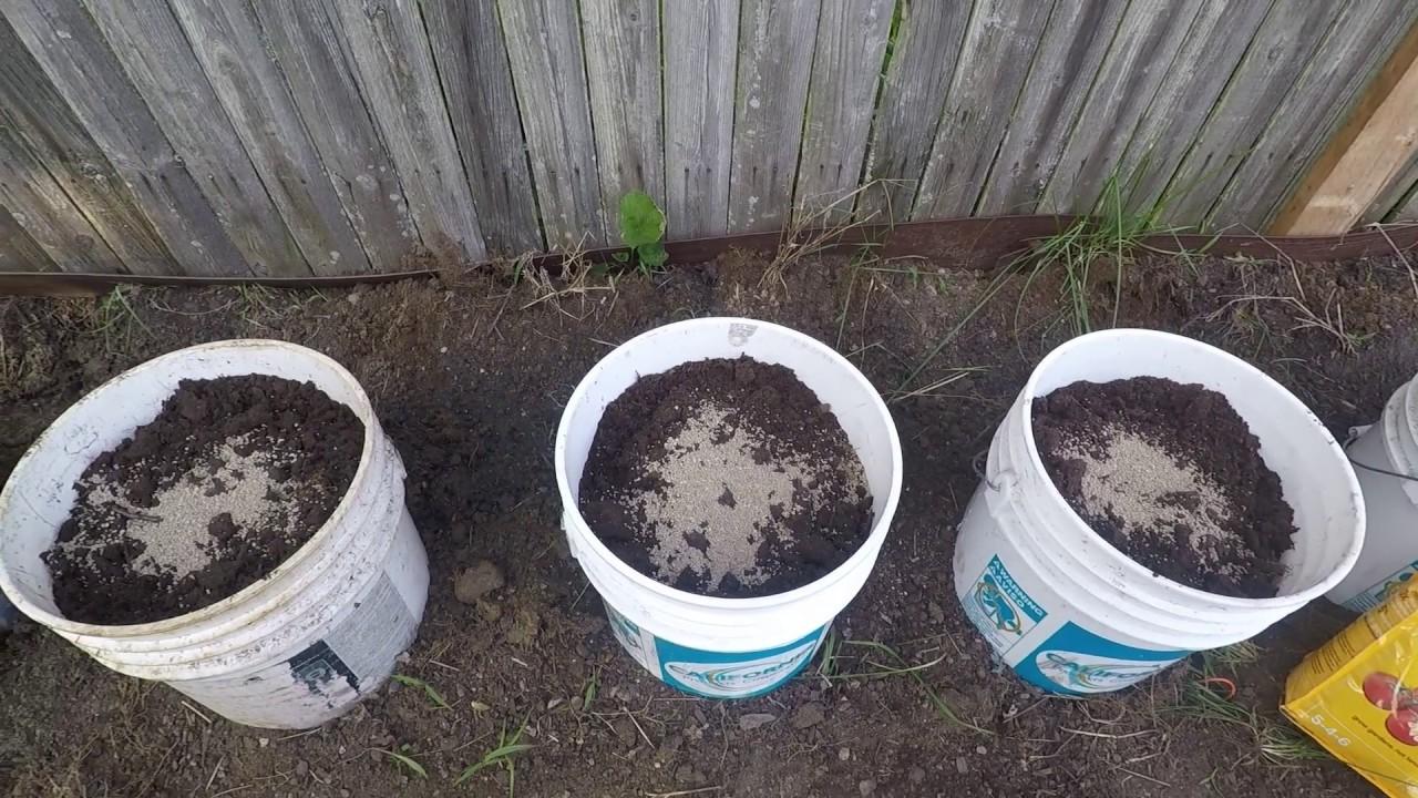 Sadzenie Pomidorów W Pojemnikach