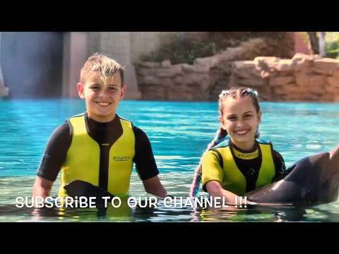 SWIMMING with DOLPHINS Dubai