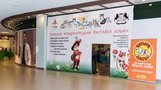 Выставка  кошек 16-17 мая 2015 г. Воронеж