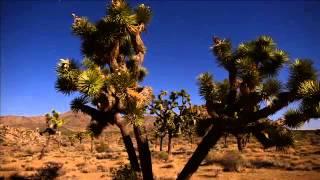 Лес в пустыне (Клип)