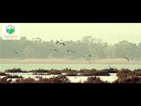 OurIsland cyprus nature & wildlife film Series - Storks