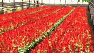 видео Цветы на даче летом: 70 фото с названиями многолетних и однолетних цветов в цветущих клумбах в саду
