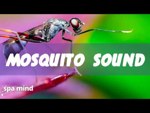 Mosquito Sound Effect Prank / Noise of Mosquito Buzzing 🐜🐜