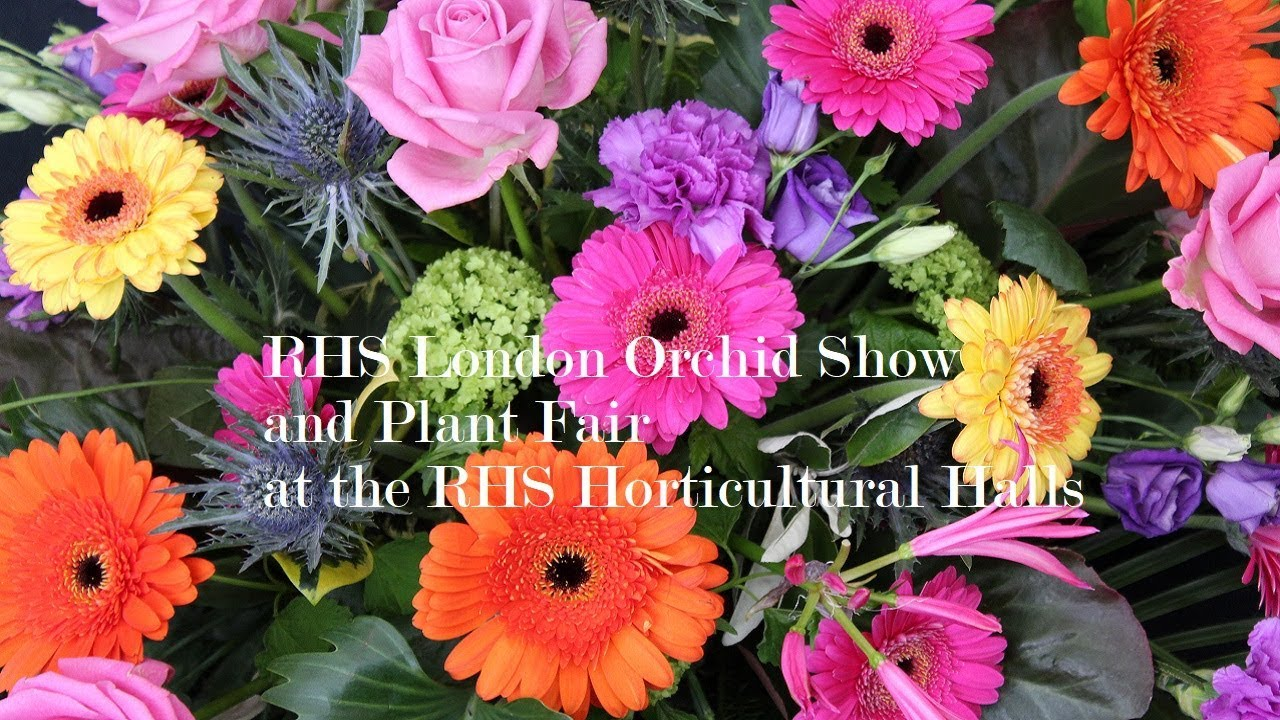 Review Rhs London Orchid Show And Plant Fair At The Rhs