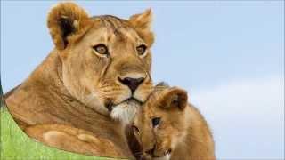 Обучающее видео для малышей .Животные и их детеныши!