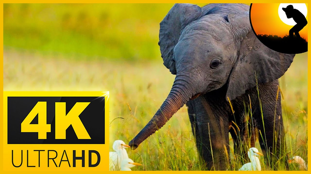 4K VIDEO ULTRAHD WILDLIFE ANIMALS