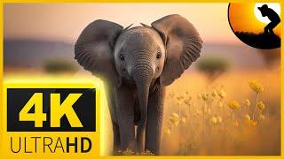 4k video ultrahd wildlife animals 4k videos nature relaxation movie for 4k oled tv