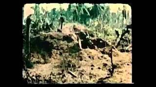 PAINT IT BLACK - Vietnam War - Psychostasia