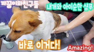 강아지 샴푸 바로 이거다! (feat. 내개와) 순한 …