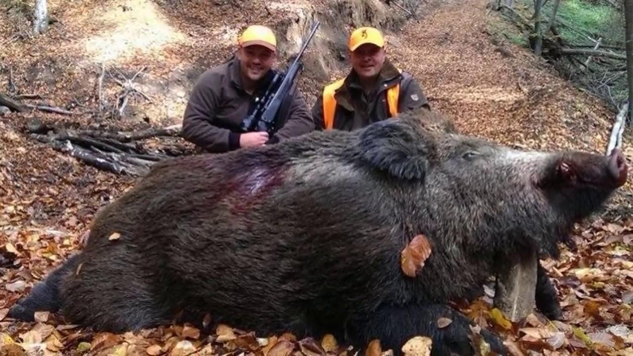 Top 10 la plus grande chasse au sanglier chasse sanglier - Cuisiner du sanglier au four ...