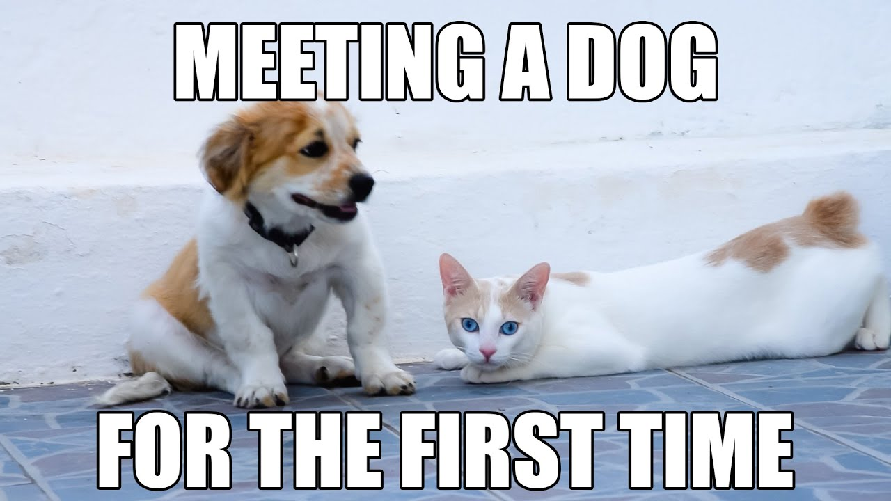 when dogs and cats meet for the first time