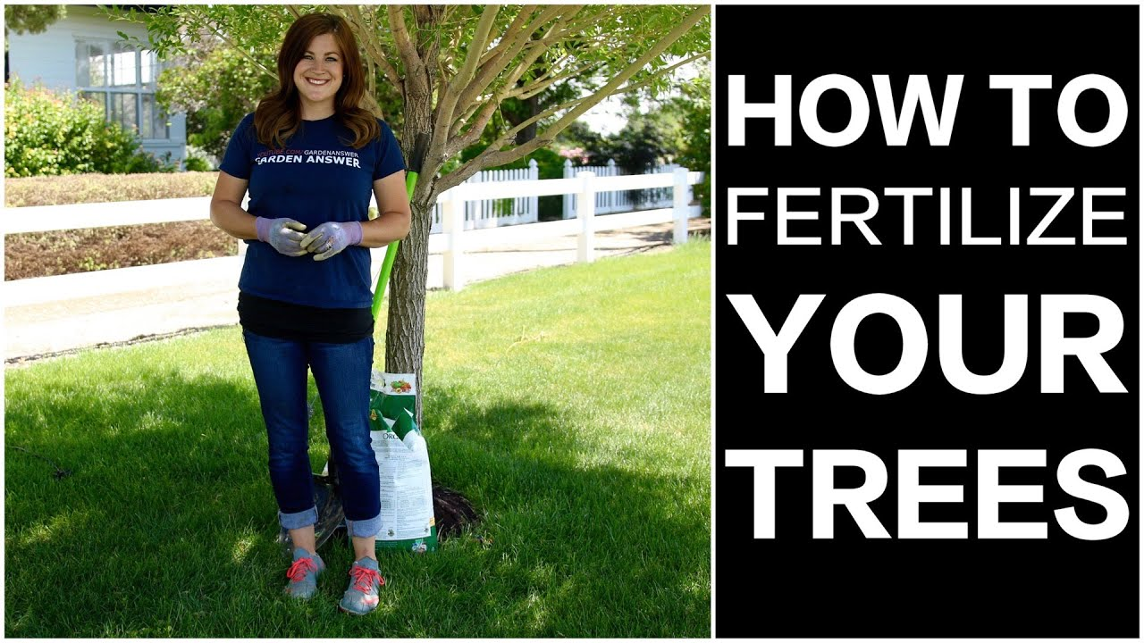 How To Fertilize Trees
