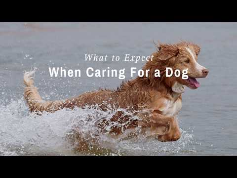 Dog Ownership | City of Surrey