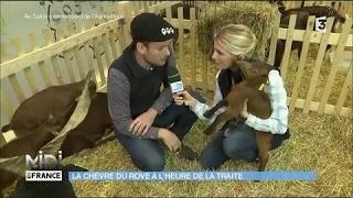 La chèvre du Rove : à l'heure de la traite