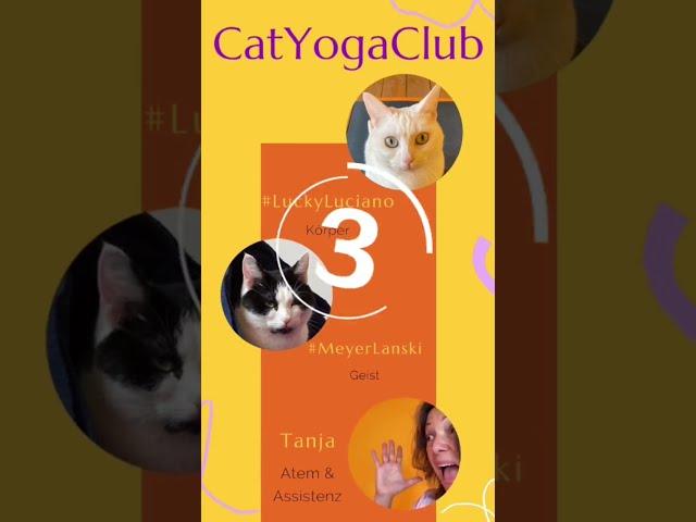 Sag Hallo zu den Yogacats - No. 3 stellt sich vor. #shorts
