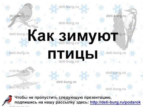 Как зимуют птицы - детская презентация