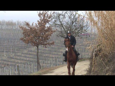 طبيب يزور مرضاه على ظهر حصان في بييمونته الايطالية