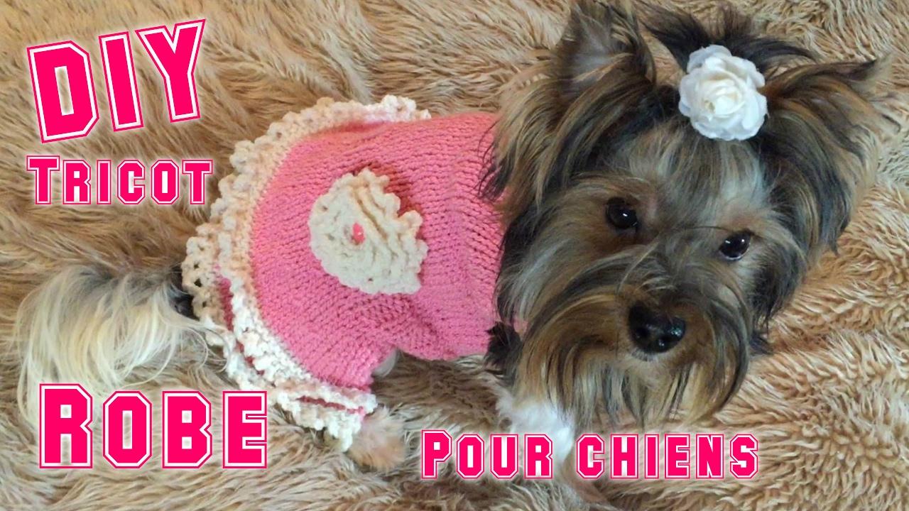 diy une robe pour chiens au tricot youtube. Black Bedroom Furniture Sets. Home Design Ideas