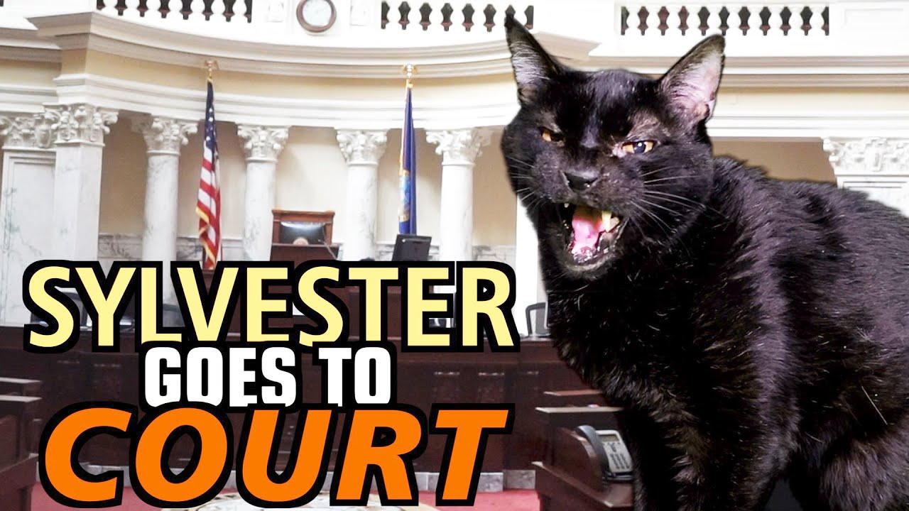 Download Talking Kitty Cat 69 - Sylvester Goes To Court