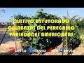 Cultivo Entutorado Calabazas Peregrino Variedades Americanas Huerto Urbano Luis Servia