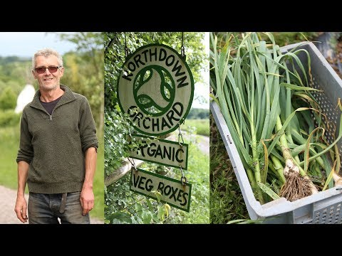 Mike Fisher's Organic Green Garlic