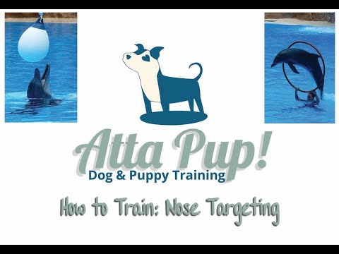 Teach Your Dog a Dolphin Trick: Nose Targeting