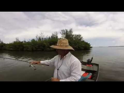 Vero Beach, Florida Fishing With Manatees Dolphins And Sharks