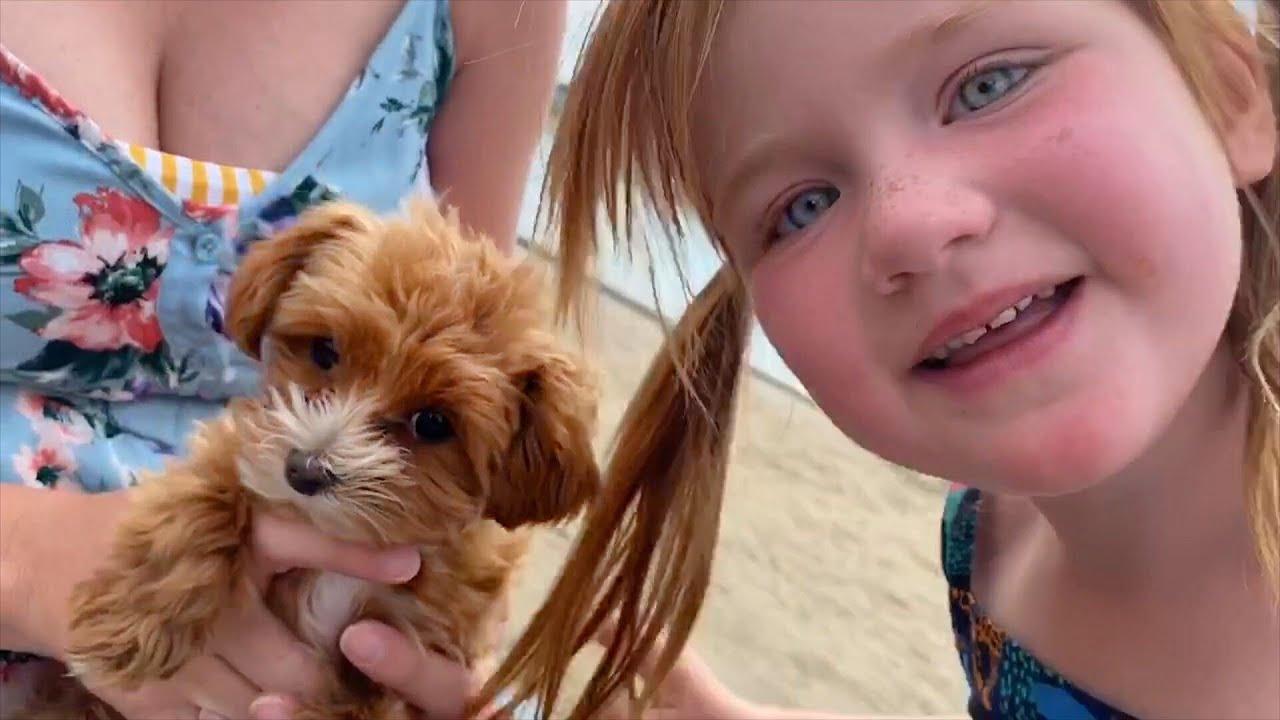 Download TiNY PET DOG!!  Surprising Family new shirts! Pirate Dad - Mermaid Mom - Niko Shark - Adley Unicorn