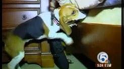 Dog sniffs out bedbugs