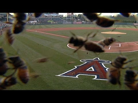 Bees disrupt Orioles vs. Angels in Anaheim