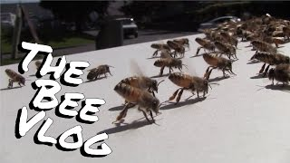 Swarm #2 for 2014 - Bee Vlog #130 - Apr 29, 2014