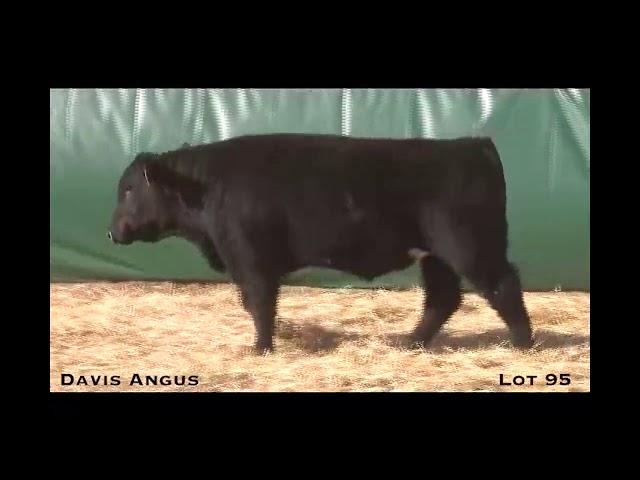 Davis Angus Lot 95