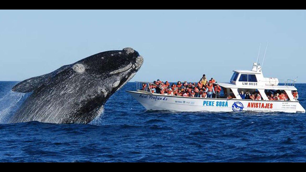 Llegan las ballenas. ¿Se las podrá ver?   Mejor Informado