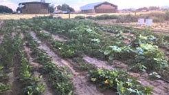 An organic farmer reflects