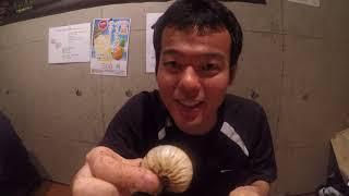 某横浜の昆虫SHOPで仕入れたもの.
