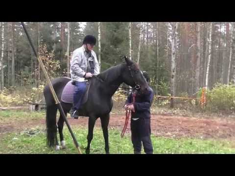 Viheraho hevosen selässä