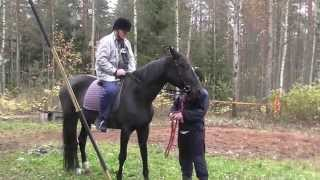 Viheraho hevosen selässä Ekaa kertaa #hevonen #heppapoika Video
