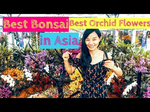 Best Orchid Flowers and Best Bonsai [Small Girl Big World]