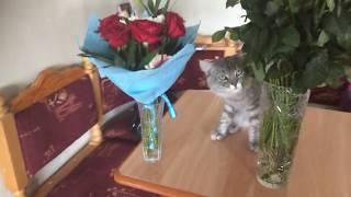 Доберман и лягушка, кот и цветы. The Doberman and the frog, the cat and the flowers.