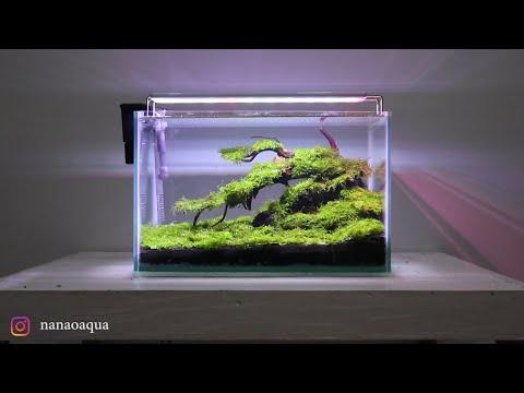 amazing-mini-bonsai-with-moss-carpet-in-nano-aquascape