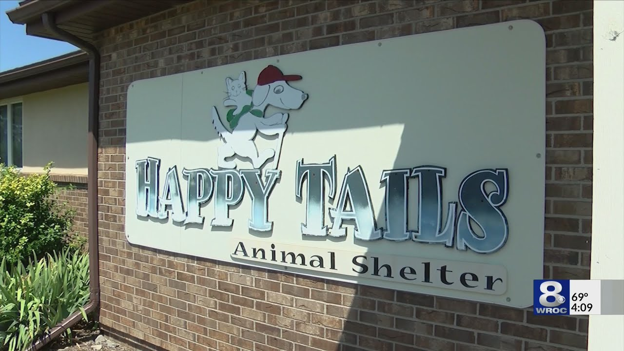 Dog lottery announced for 85 Naples dogs who were abused