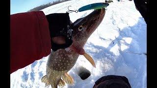 ЩУКИ НА РАТЛИН!!!ЛИФТ ОКУНЯ НА ШАРАГУ И БАЛАНСИР!!!Рыбалка на Алтае.Рыбалка на Оби.