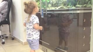 Рыбка в аквариуме 2 года Даниэль