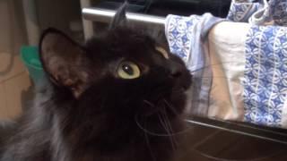 Дай жрать докучают хозяйку кошки. Смешные кошки