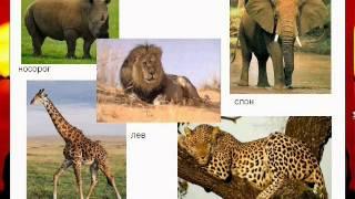 Материк Африка для детей. Наше всё!