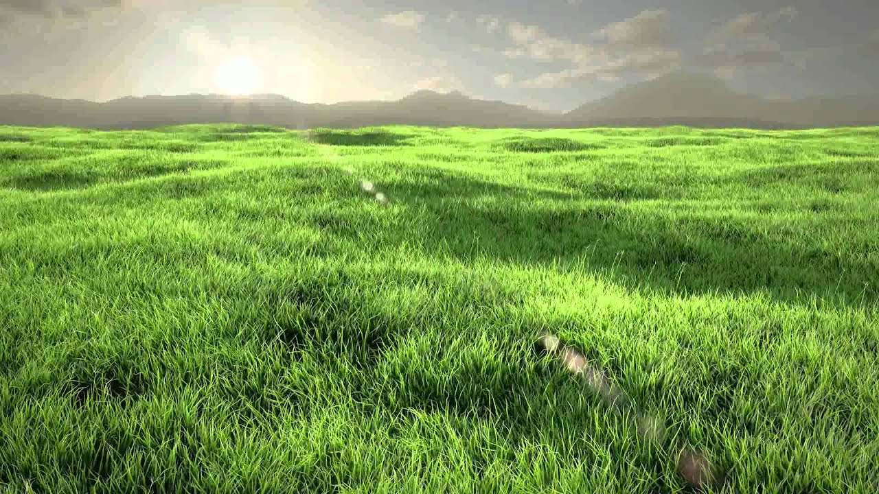 hd grass animation - covered
