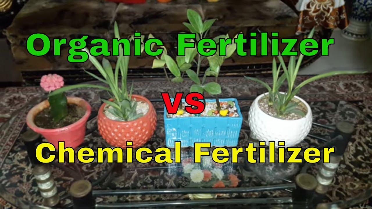 Organic Fertilizer Vs Chemical Fertilizer 20th December