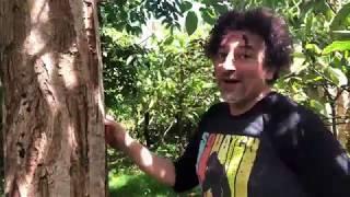 Noniland Plants & Trees