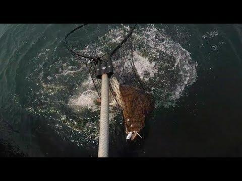 Fluke fishing in Montauk